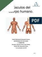 _Musculos COMPLETOS _fisiologia del ejercicio (Reparado).pdf