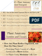 Lecture - Chapter 42 - Stems, Roots, and Leaves