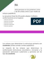 ESTRUCTURAS DE LAS PROTEINAS_A