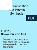 DNA Replication and Protein Synthesis (1).ppt