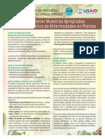 Muestras de enfermedades en fitopatologia