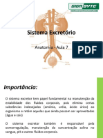 Aula 7 - sistema excretor