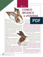 5083-conejo-ibicenco-o-d-eivissa