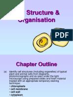 biology_-_cell_structire_organization
