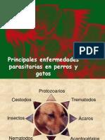Principales enfermedades parasitarias en perros y gatos