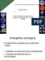 aula_2_-_processos_nos_ecossistemas_cadeia_alimentar_e_fluxo_de_energia