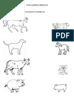 ANIMALE PUI FISA