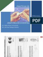 Practicas de anatomia bucodental