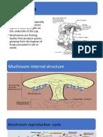 mushroom cultivation technology.pptx