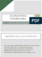 Veterinaria por acupuntura