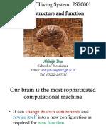 BS20001_Lecture9_Neurobiology_Aut2019.ppt