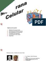2 - membranacelular-19