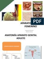 Aparato Genital Femenino 1