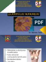 GLANDULAS MAMARIAS dic 2019 PDF(1)