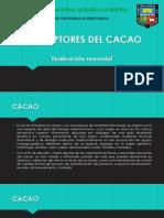 DESCRIPTORES DEL CACAO.pptx