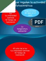 factores_que_regulan_la_actividad_fotosintetica.pdf