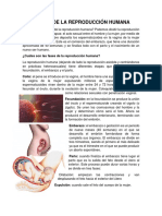 ETAPAS DE LA REPRODUCCIÓN HUMANA.docx