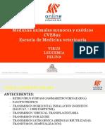 CLINICA FELINA - Virus Leucemia felina