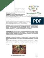 Funciones de la Raíz.docx