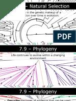 AP Biology - 7.9 - Phylogeny.pptx