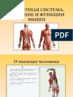 Мышечная система 8кл..pptx