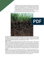 Humusul – fertilitate pentru sol (II.docx