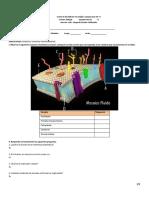 Examen biología 2P.docx