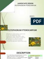 PELTOPHORUM PTEROCARPUM.pptx