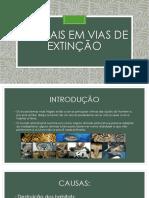 ANIMAIS EM VIAS DE EXTINÇÃO.pptx