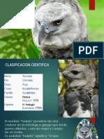 Águila Harpía.pptx