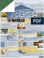 HONGOS I_II.pdf