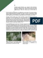 1 LA OIDIOSIS DE LA VID ICA.docx