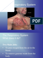 Health Respiratory System.ppt Group1.ppt
