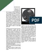 articulo procasinacion.docx