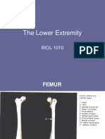 66400_lower limb lecture_engl 12.ppt
