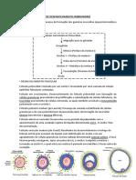 RESUMO COMPLETO DE EMRBIOLOGIA.docx