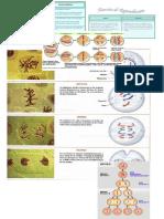 caracteristicas de la celula