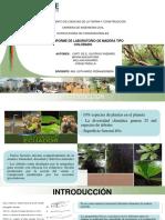 Presentacion COLORADO.pptx