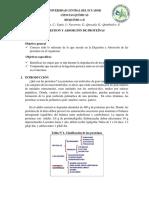 DIGESTION-Y-ABSORCION-DE-PROTEINAS-