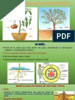 Organos-vegetativos-2018.pptx