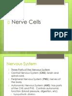 8a nerve cells.pdf