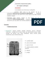 Laborator Practic - Radiologie