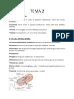 Anatomia t2