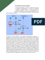 Farmacología De Transmisión Ganglionar y autacoides.docx