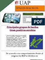 PRINCIPIOS-BACILOS-ENTEROBACTERIAS-copia.pptx