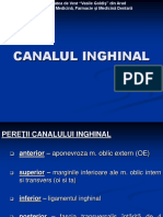 5. Canalul inghinal