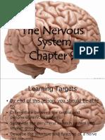 g10-nervous-system (1)