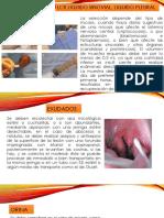 fluidos biologicos.pptx