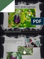 Cultivando Berenjenas en Casa