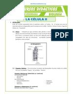 La-Celula-2-para-Quinto-de-Secundaria